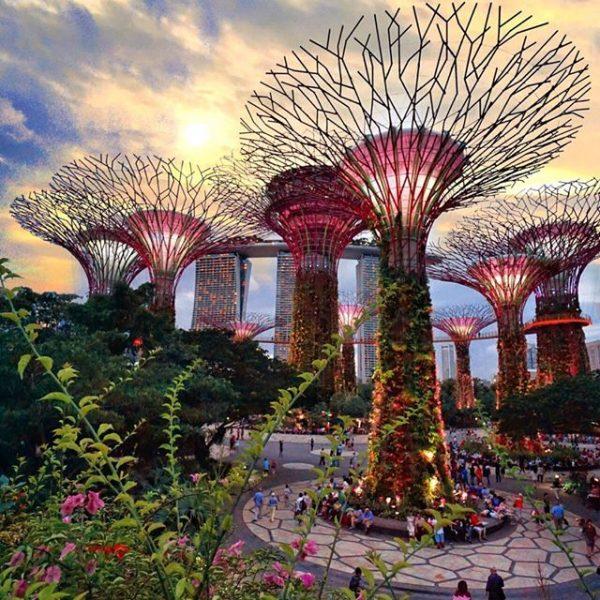 Garden by the bay- điểm du lịch singapore nổi tiếng