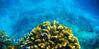 lặn ngắm san hô ở hòn sẹo