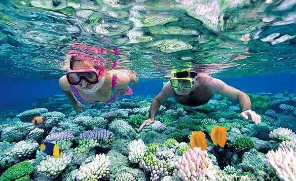 Ngắm san hô ở Bãi Dứa