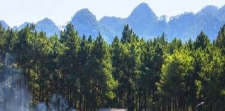 Rừng Thông Bản Áng điểm du lịch Mộc châu