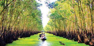 Rừng Tràm Trà Sư điểm du lịch An Giang