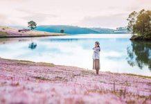 Đồi cỏ hồng Đà Lạt đẹp ngẩn ngơ những ngày chớm thu