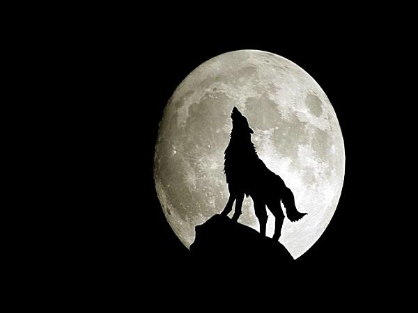 Chó tru hay sủa ban đêm là điềm gì?